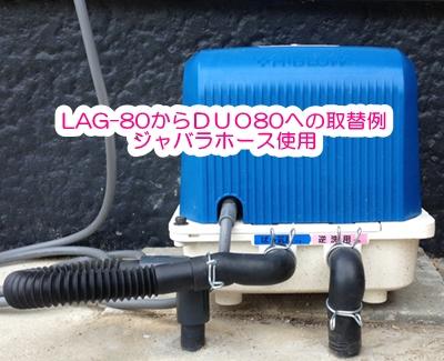 duo80